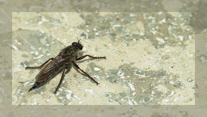 mein erstes insektenmakro