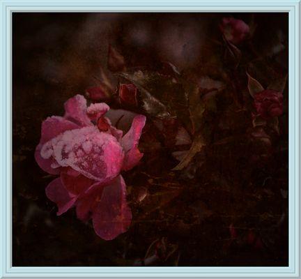 #.....Mein erstes Mittwochsblümchen.......#