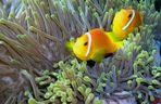 Mein erstes Unterwasserfoto