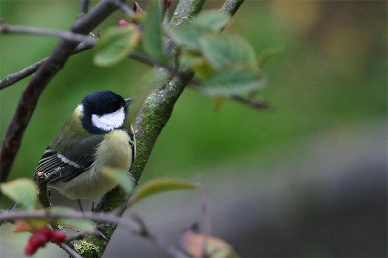 Mein erstes Wildlife Vogelbild !