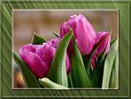 mein etwas verfrühtes Mittwoschsblümchen...
