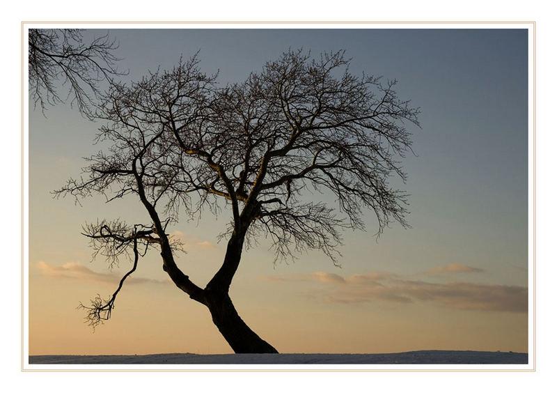 Mein Freund der Baum ...............