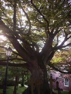 Mein Freund, der Baum <3