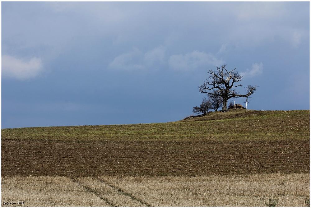 """Mein Freund """"der Baum"""" ..."""