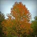 Mein Freund der Baum... :-)
