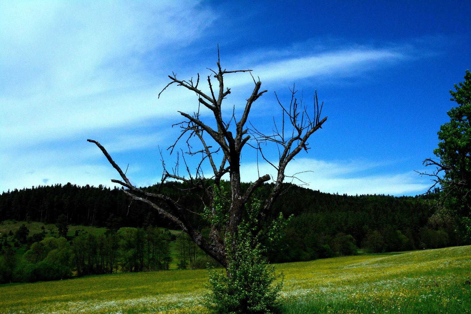 ....mein Freund der Baum