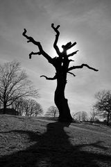 Mein Freund der Baum.....