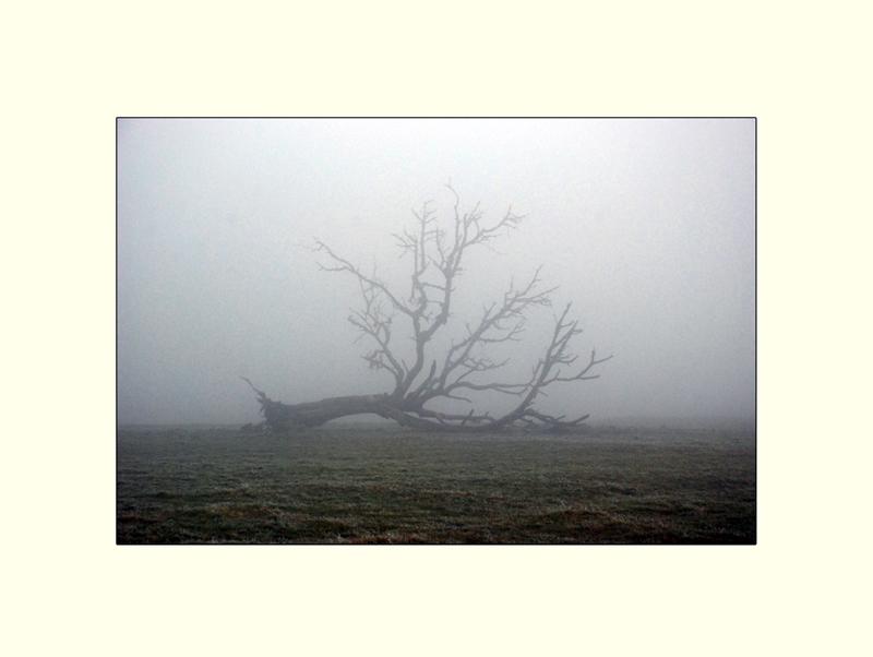 Mein Freund ... der Baum