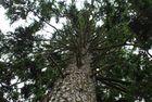 ....mein Freund der Baum.......