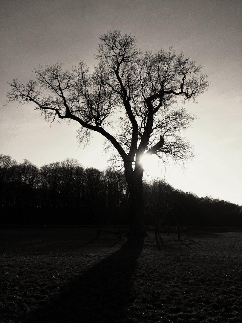 Mein Freund der Baum I