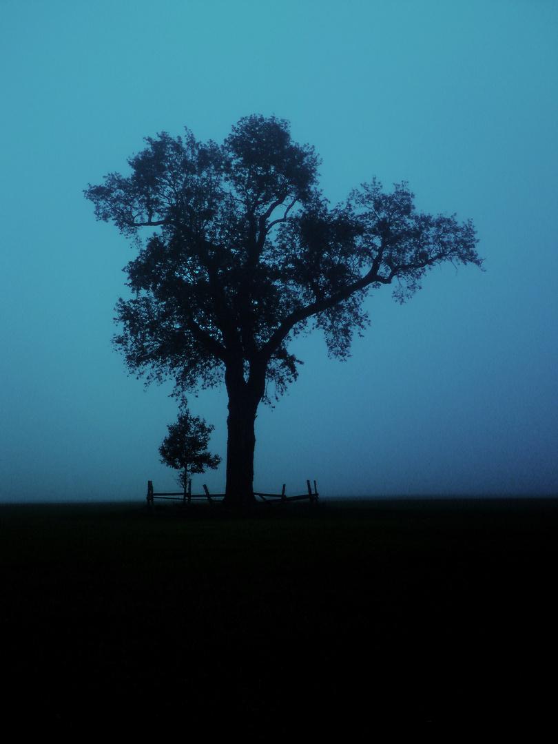Mein Freund der Baum II