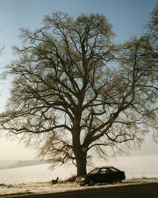 Mein Freund, der Baum, im Winter