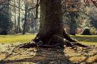 Mein Freund der Baum ist....