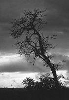 Mein Freund der Baum ist tot!!!