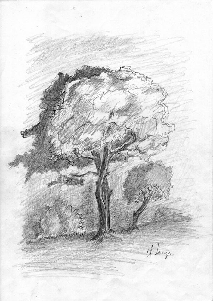 Mein Freund der Baum (mit Frau & Kind) Radeberg