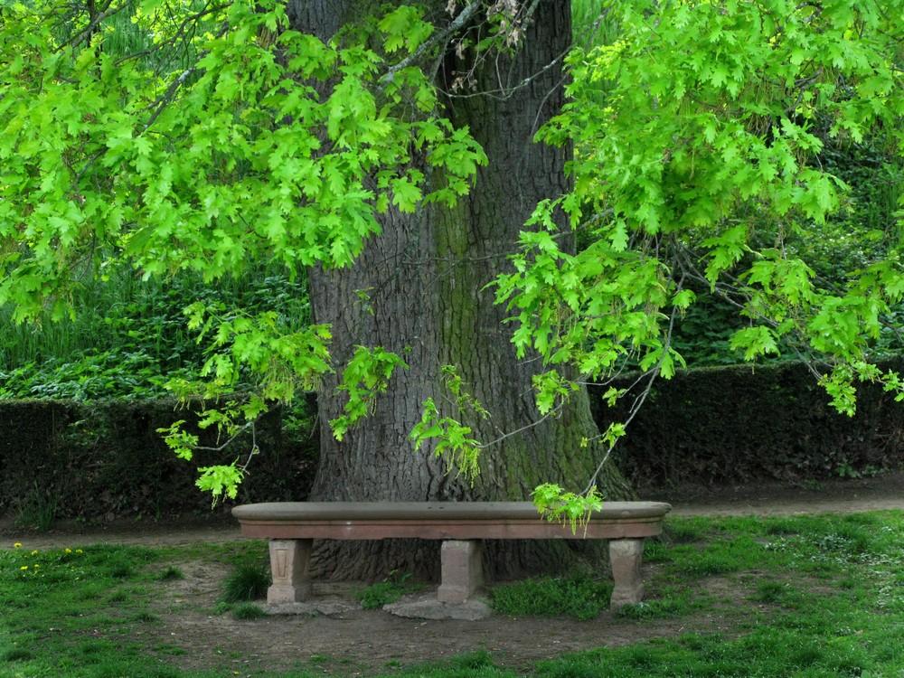 Mein Freund, der Baum....Ruheplatz