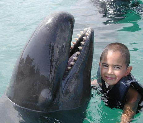 Mein Freund, der Falsche Killerwal
