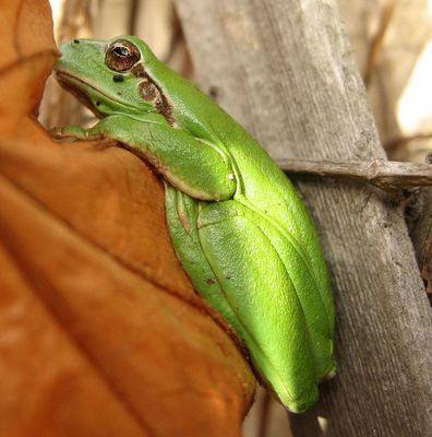 Mein Freund der Froschi