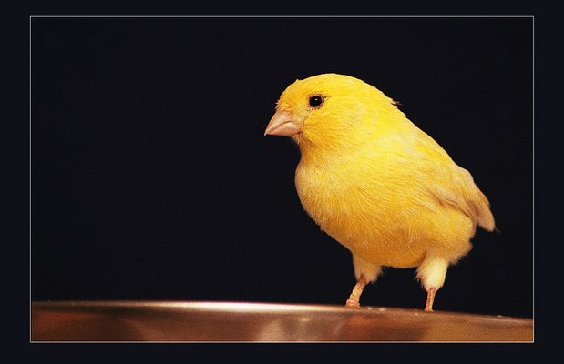 Mein Freund der Vogel!