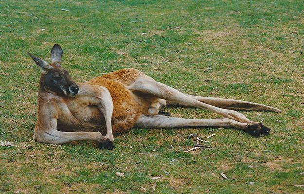 Mein Freund in Adelaide