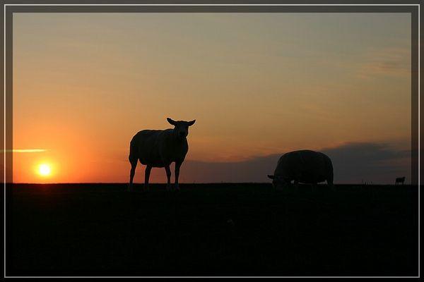 Mein Friesland