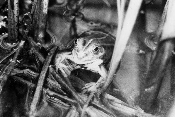 Mein Frosch im Park