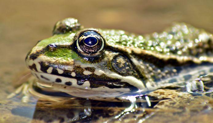 Mein Froschkönig 2012