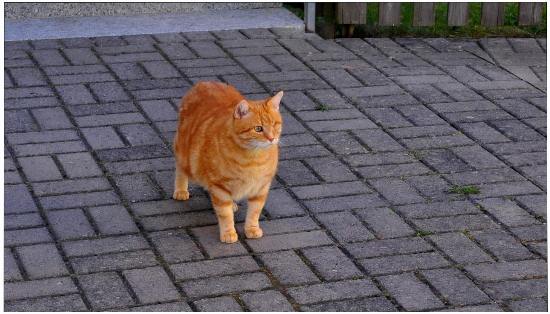 Mein Fuchsie geht mit mir spazieren (Mi Zorrito pasea conmigo)
