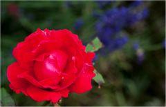 Mein Garten-06-16_5