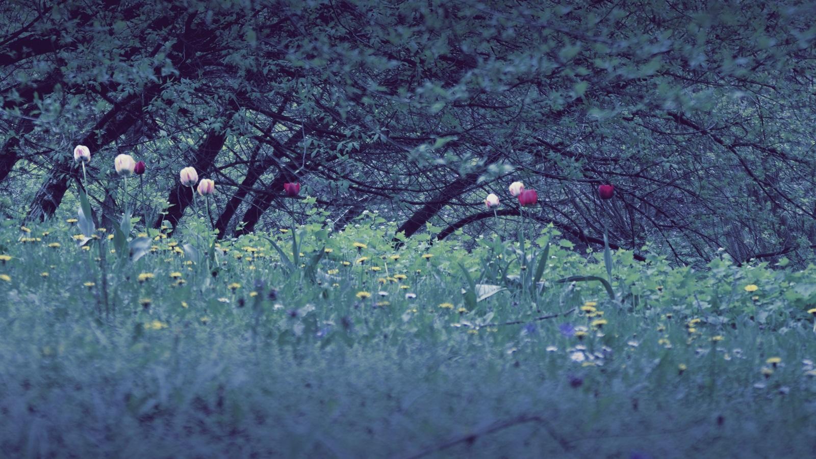 Mein Garten der Sehnsucht