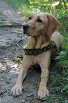 Mein Gasthund Mia