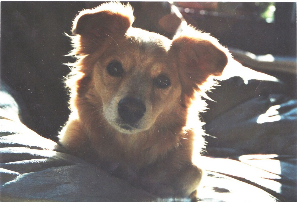 Mein geliebter kleiner Toni 1992 - 10.03.2008