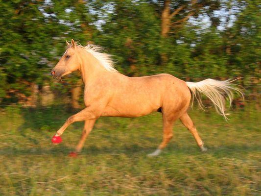 ...mein gestiefeltes Pferd.....