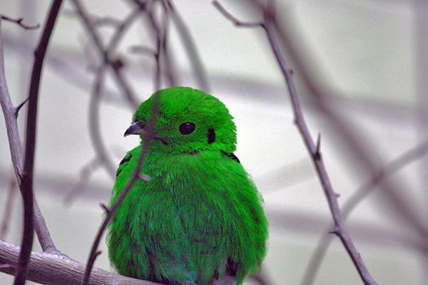 mein grüner Liebling