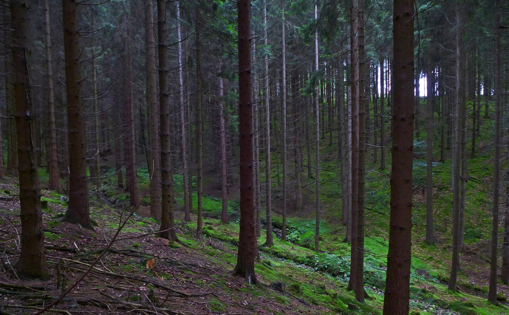 mein grünes Lieblingsbachtal im Ebbegebirge im Märkischen Kreis