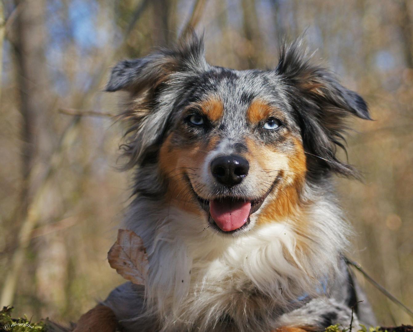 ' mein gute Laune Hund '