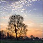 Mein Hamme-Baum