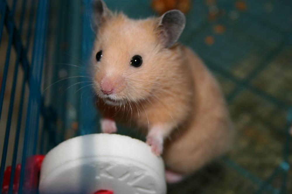 Mein Hamster die Zweite ;-)