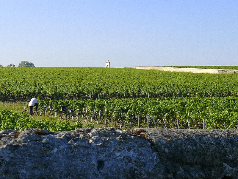 Mein Haus, mein Feld, mein Wein