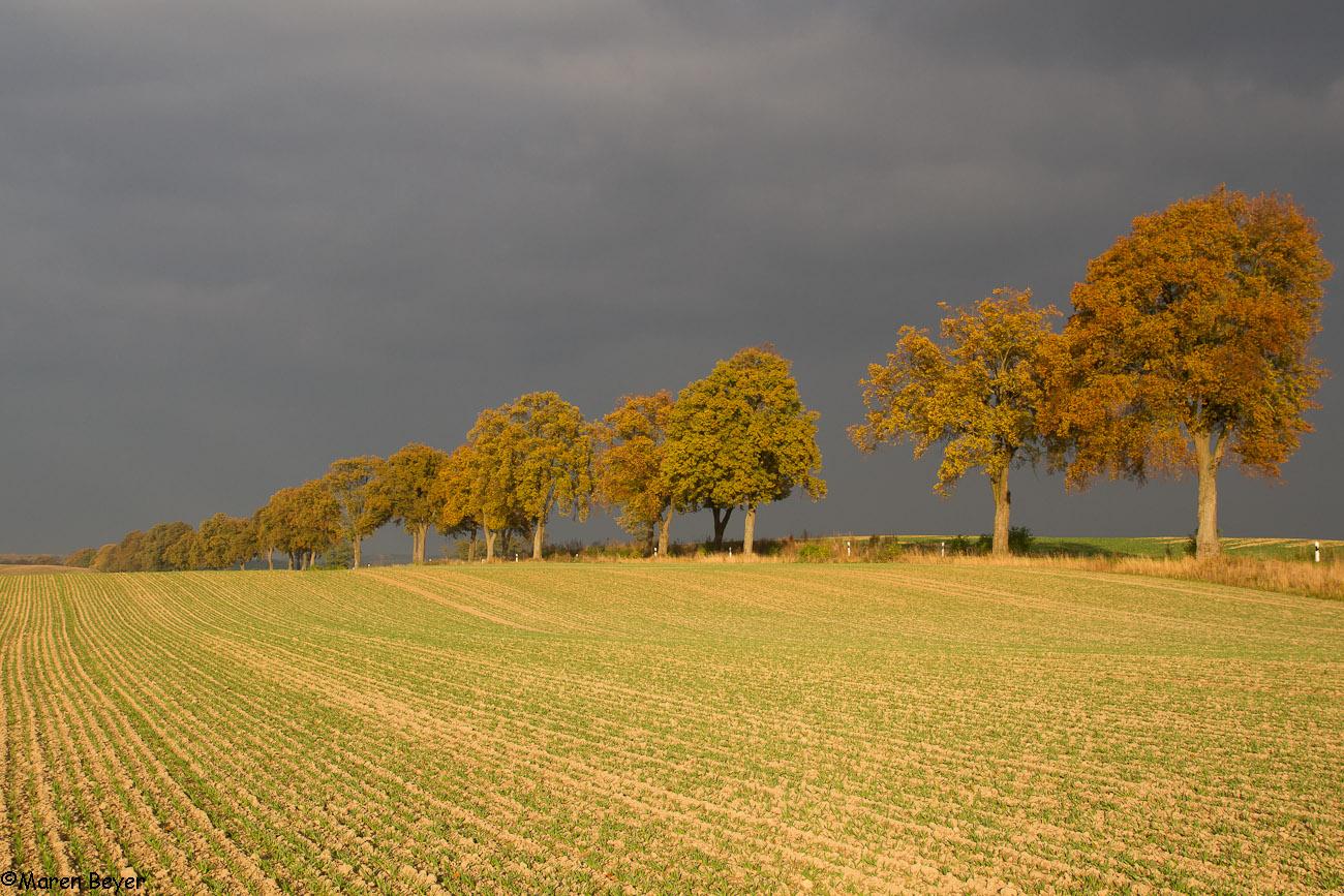 Mein Heimweg im Herbst