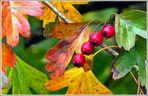 Mein Herbst-Bild  ..