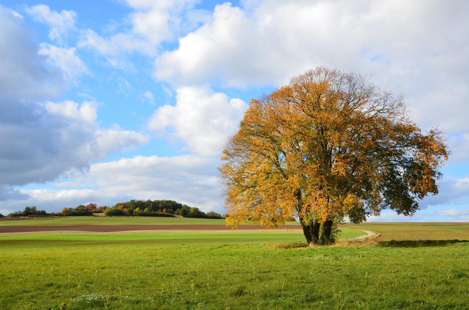 """""""Mein"""" Herbstbaum"""