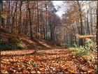mein Herbstwald...