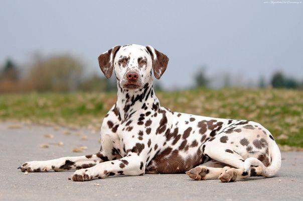 Mein hübsches Hundemädchen Pain