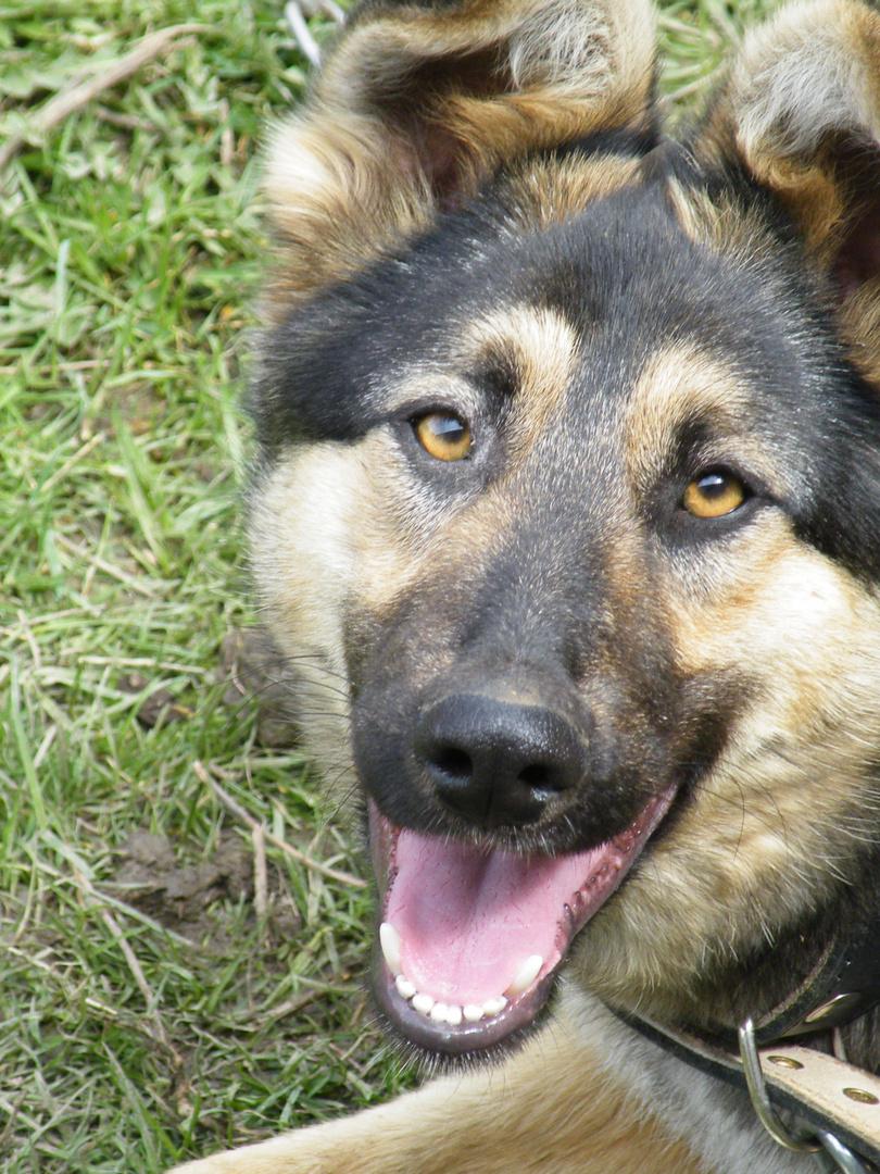Mein Hund 1