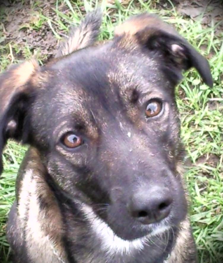 Mein Hund 2