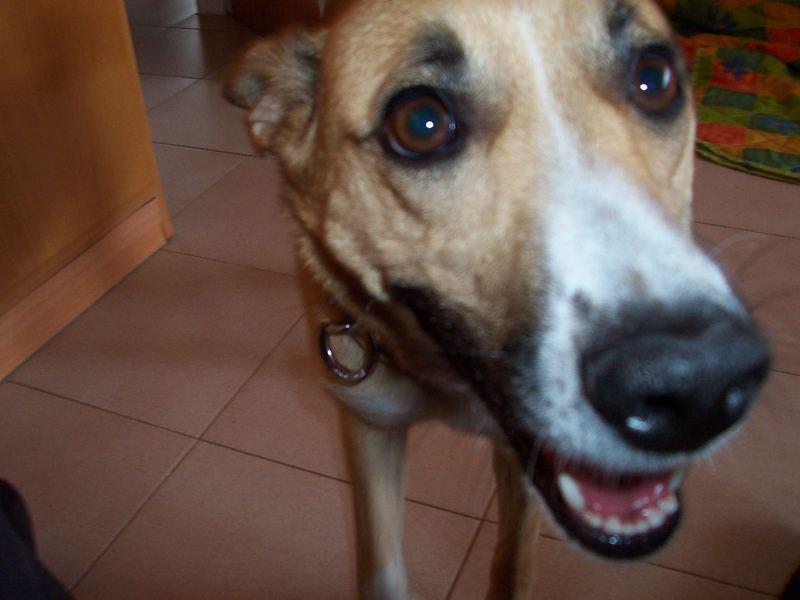 mein hund ;-)