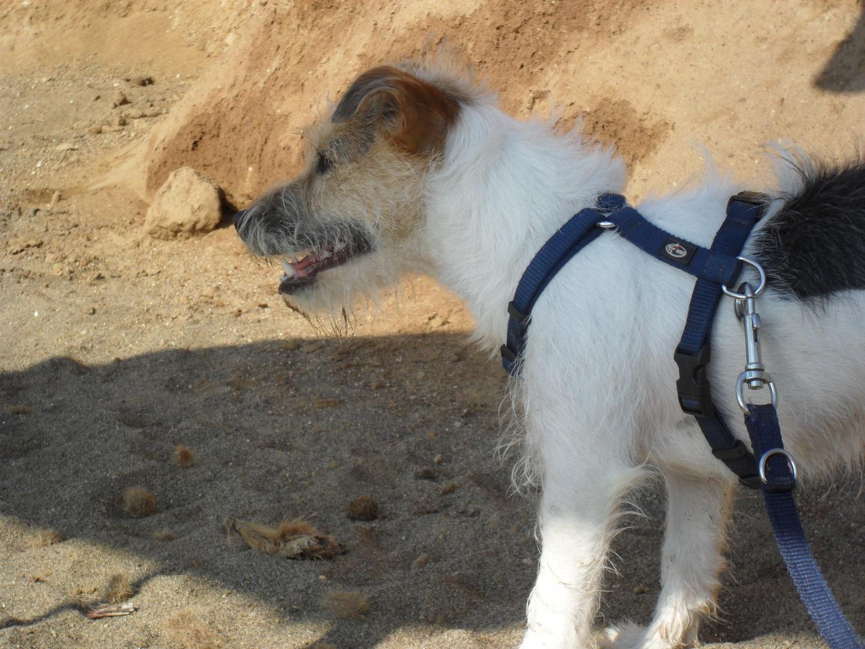 mein Hund am Strand