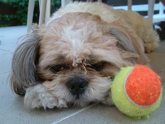 Mein Hund Benji