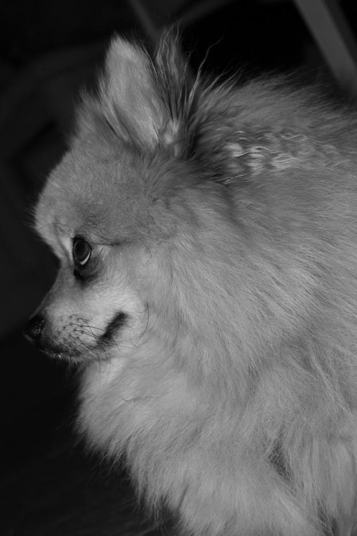 Mein Hund :-)